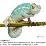 StrengthsFinder Discussion: Adaptability