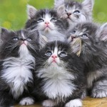 3 Ways to Keep it Real with Customers (Warning: CUTE Kittens)