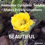 5 Tips To Make A Prickly Situation Beautiful