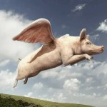 When Pigs Fly In Customer Service